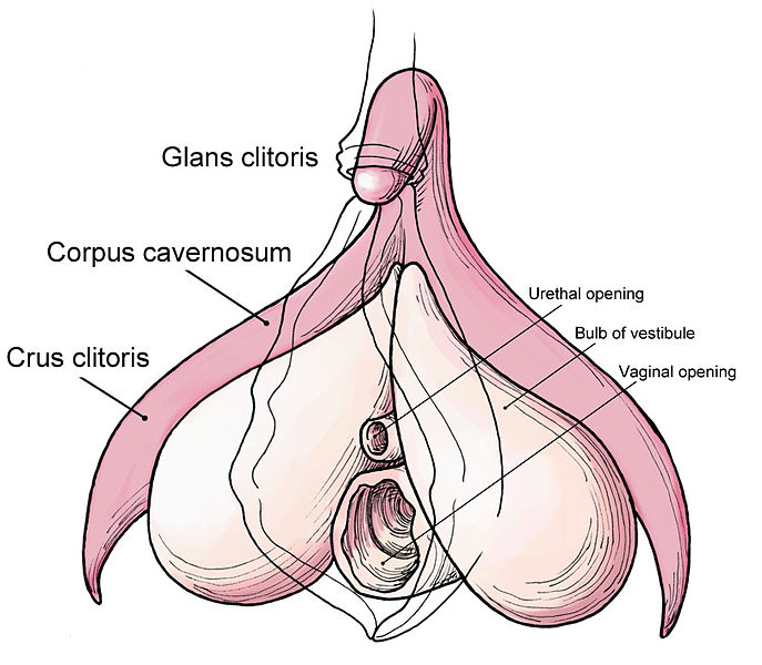 Clitoris finding powered by phpbb